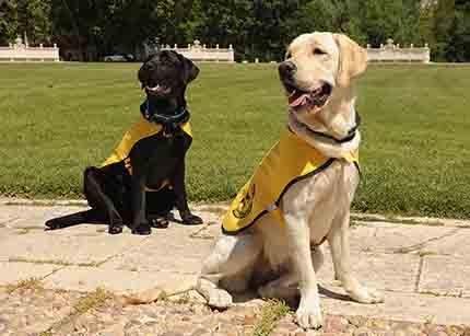 Perros guía en formación