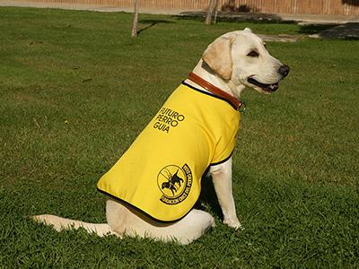 Futuro perro guía de la ONCE