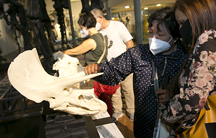 Una persona ciega toca la maqueta de un cráneo de triceratops