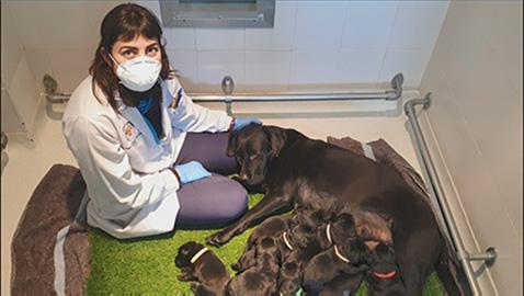 Camada de futuros perros guía nacida durante la pandemia
