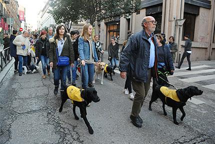 Perros Guía de la ONCE en las Vueltas de San Antón