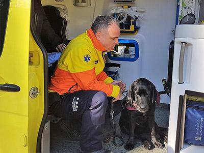 Perro Guía con el nuevo sistema de retención en ambulancias
